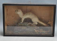 TAXIDERMY - AN EARLY 20TH CENTURY CASED STOAT