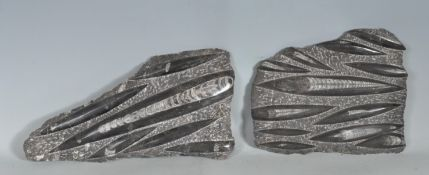 TWO ORTHOCERAS FOSSIL SPECIMENS