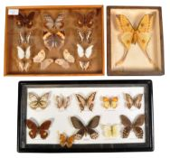 COLLECTION OF CASED BUTTERFLY & MOTH SPECIMENS