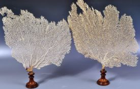 19TH CENTURY PAIR OF FAN CORAL SPECIMENS ON STANDS