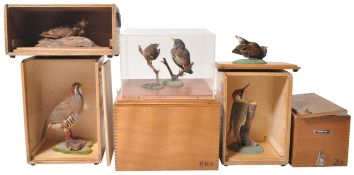 COLLECTION OF CASED VINTAGE TAXIDERMY BIRDS