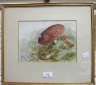 Unsigned, TWO FROGS, ALONGSIDE TOADSTOOLS, WATERCOLOUR, 16.5 X 24cm, another, TWO DONKEYS, 16.5 x