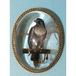 A Victorian Essex crystal brooch depicting a peregrine falcon with jesses, standing on a perch, in