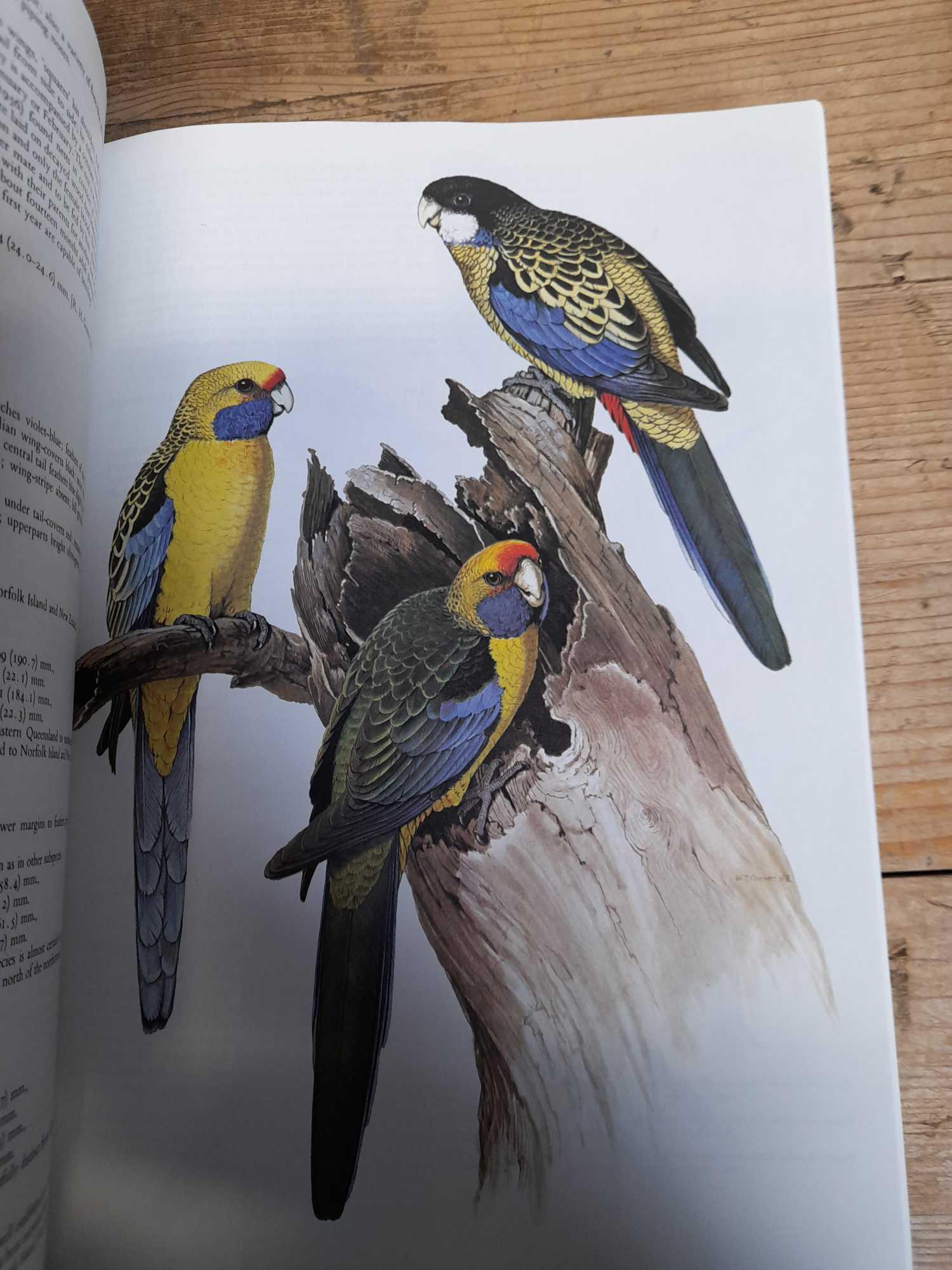 3 PARROT BOOKS - Image 10 of 20