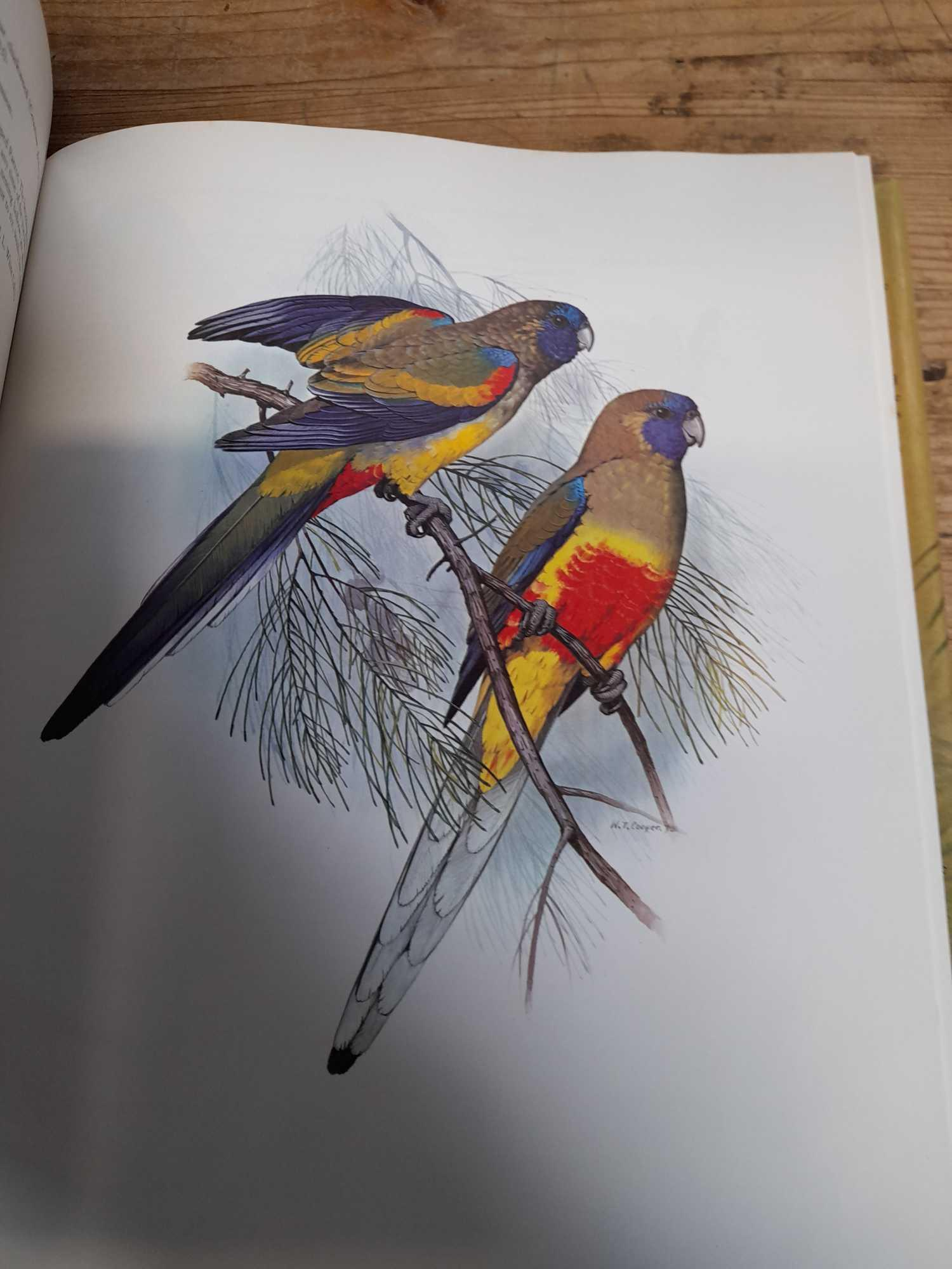 3 PARROT BOOKS - Image 17 of 20