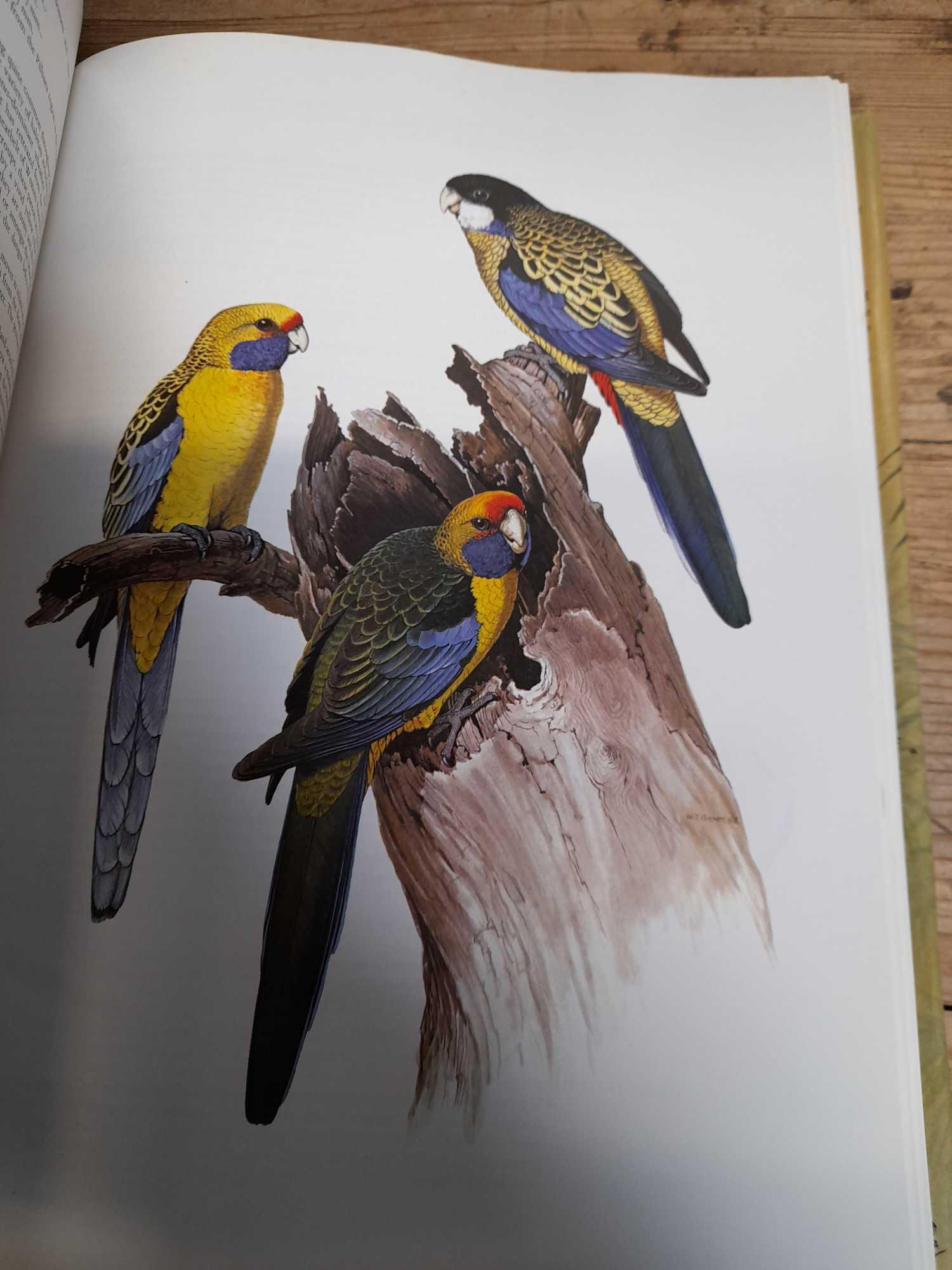 3 PARROT BOOKS - Image 18 of 20