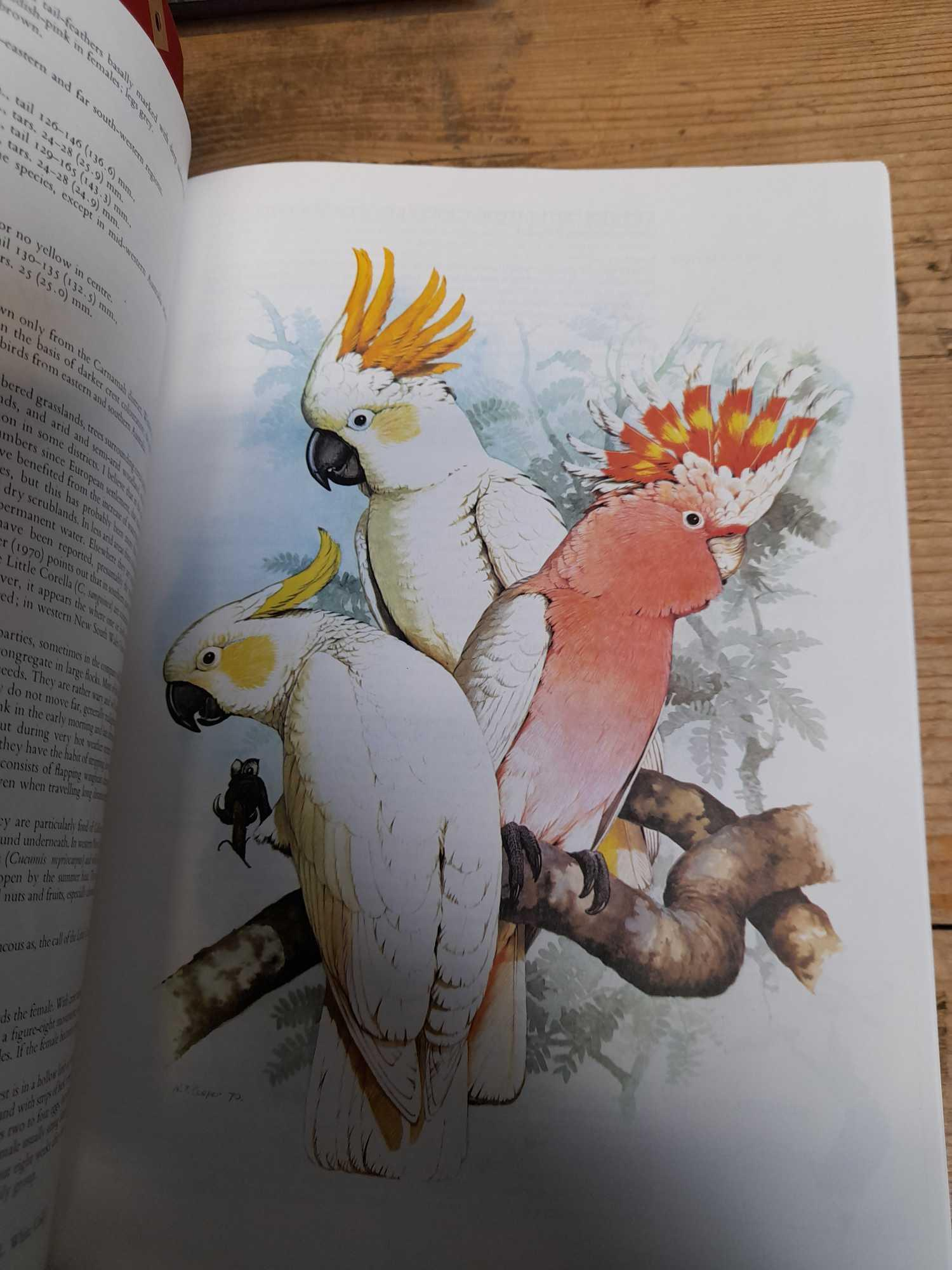 3 PARROT BOOKS - Image 13 of 20