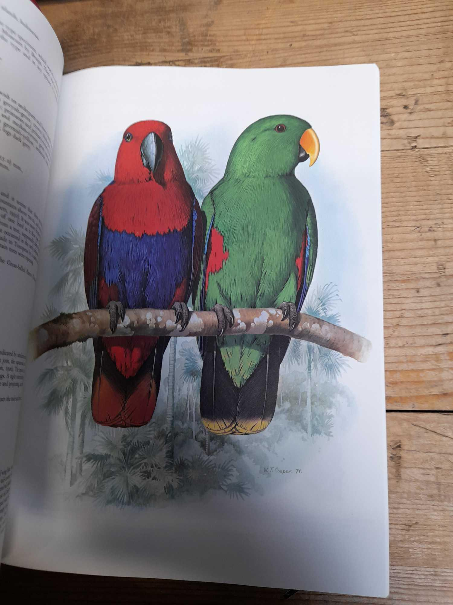 3 PARROT BOOKS - Image 11 of 20