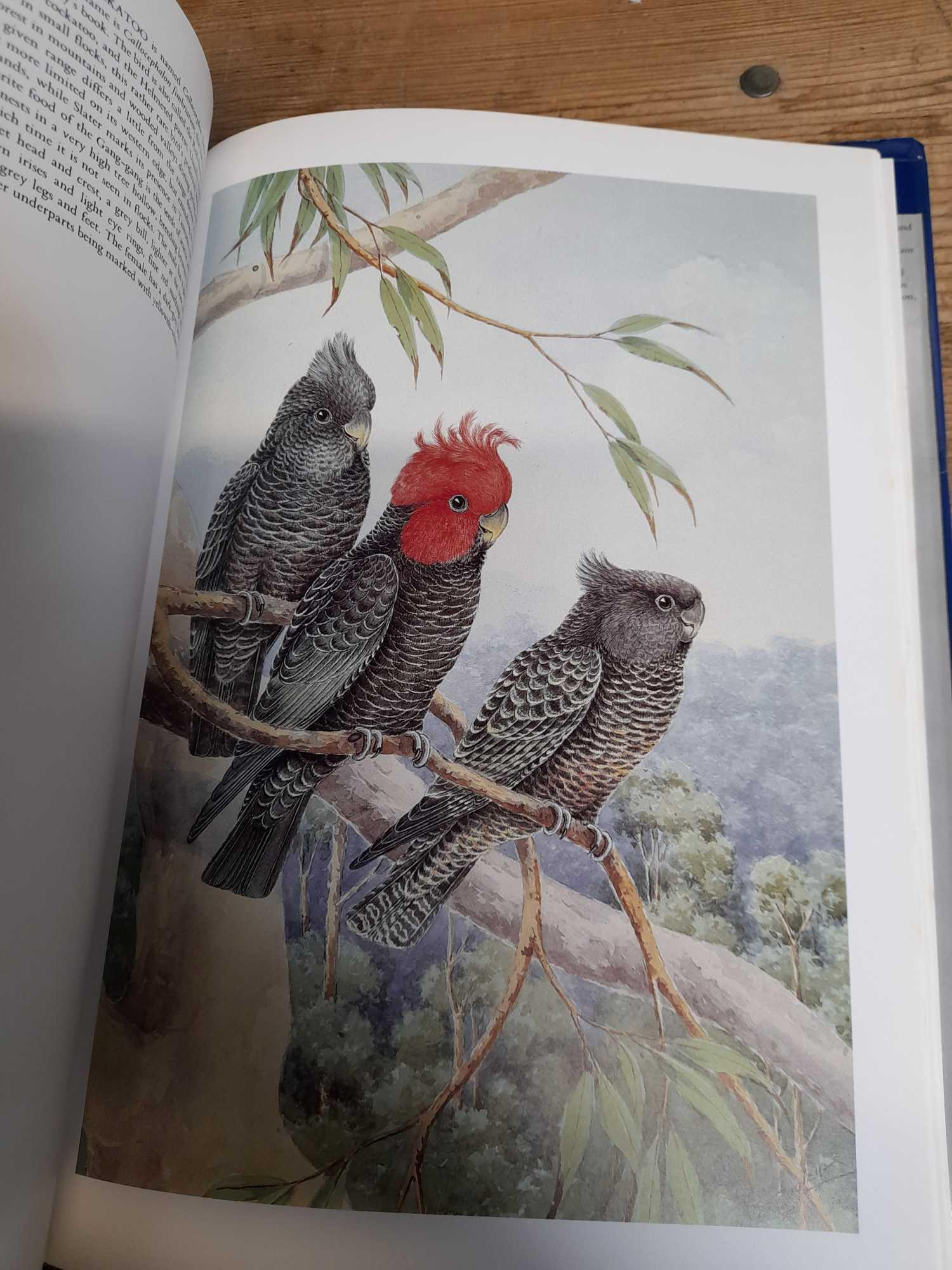 3 PARROT BOOKS - Image 7 of 20
