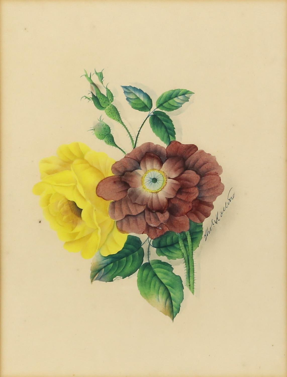 Thomas Holland (British, 1795-1865), set of four flower studies, signed, watercolours, - Image 3 of 7