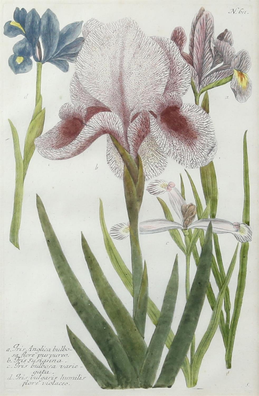 Johann Wilhelm Weinmann (German, 1683-1741). 'Phytanthoza Iconographia'. Four botanical engravings