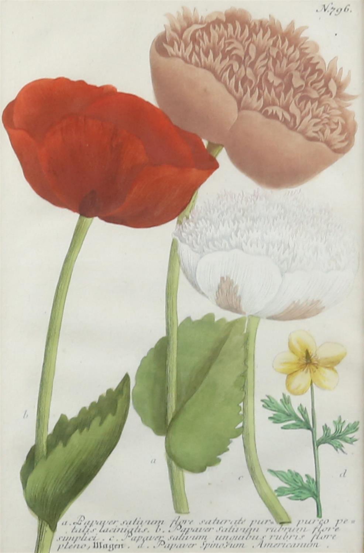Johann Wilhelm Weinmann (German, 1683-1741). 'Phytanthoza Iconographia'. Four botanical engravings - Image 3 of 8