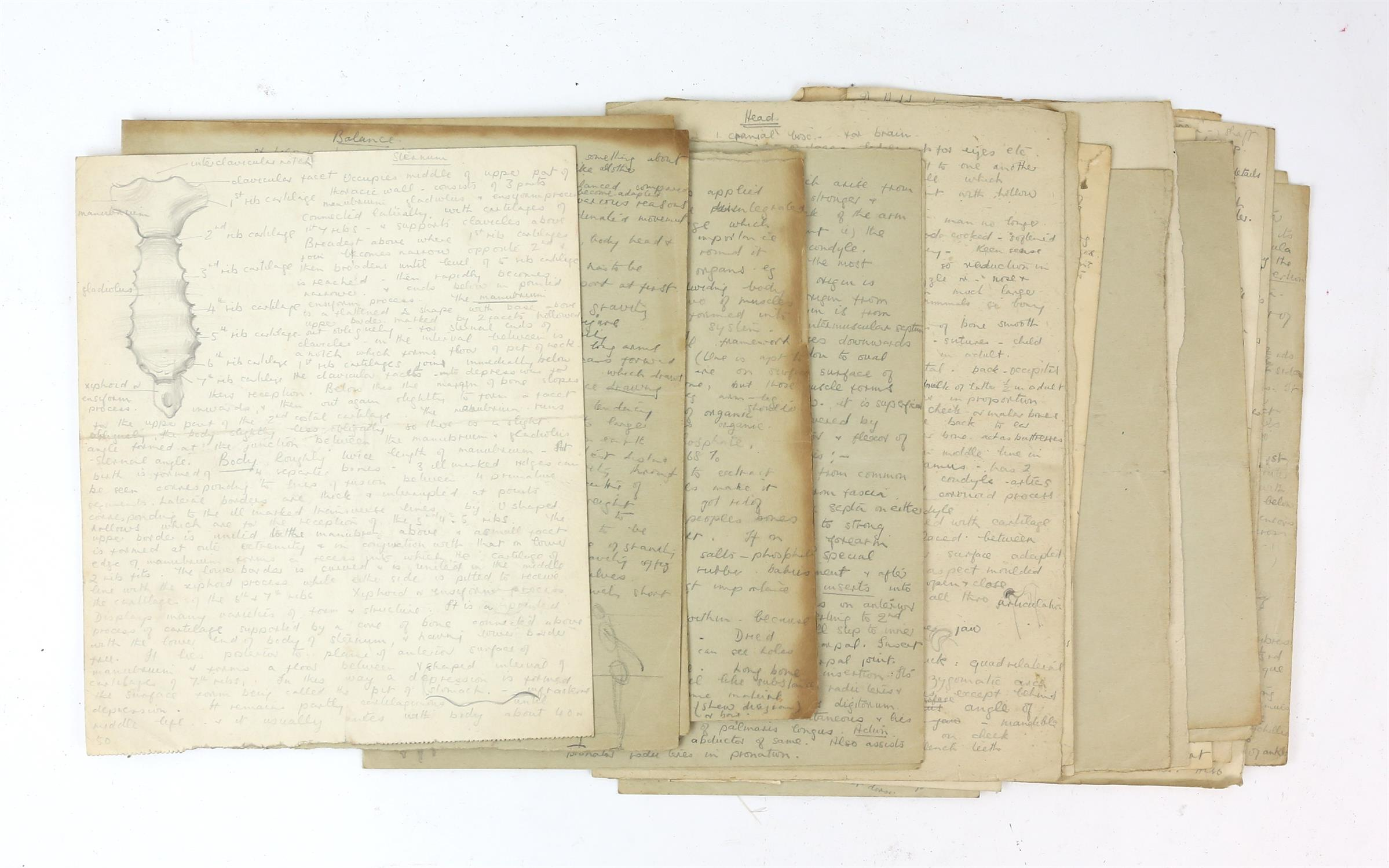 Attributed to Barbara Shaw (b.1924). Folder containing a large number of anatomical drawings with - Image 3 of 5