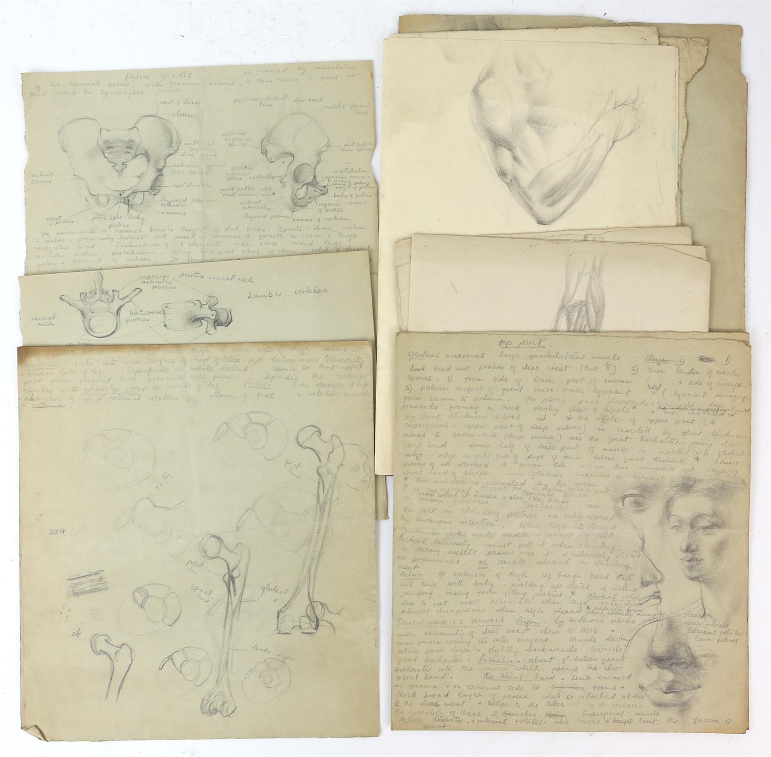 Attributed to Barbara Shaw (b.1924). Folder containing a large number of anatomical drawings with - Image 4 of 5