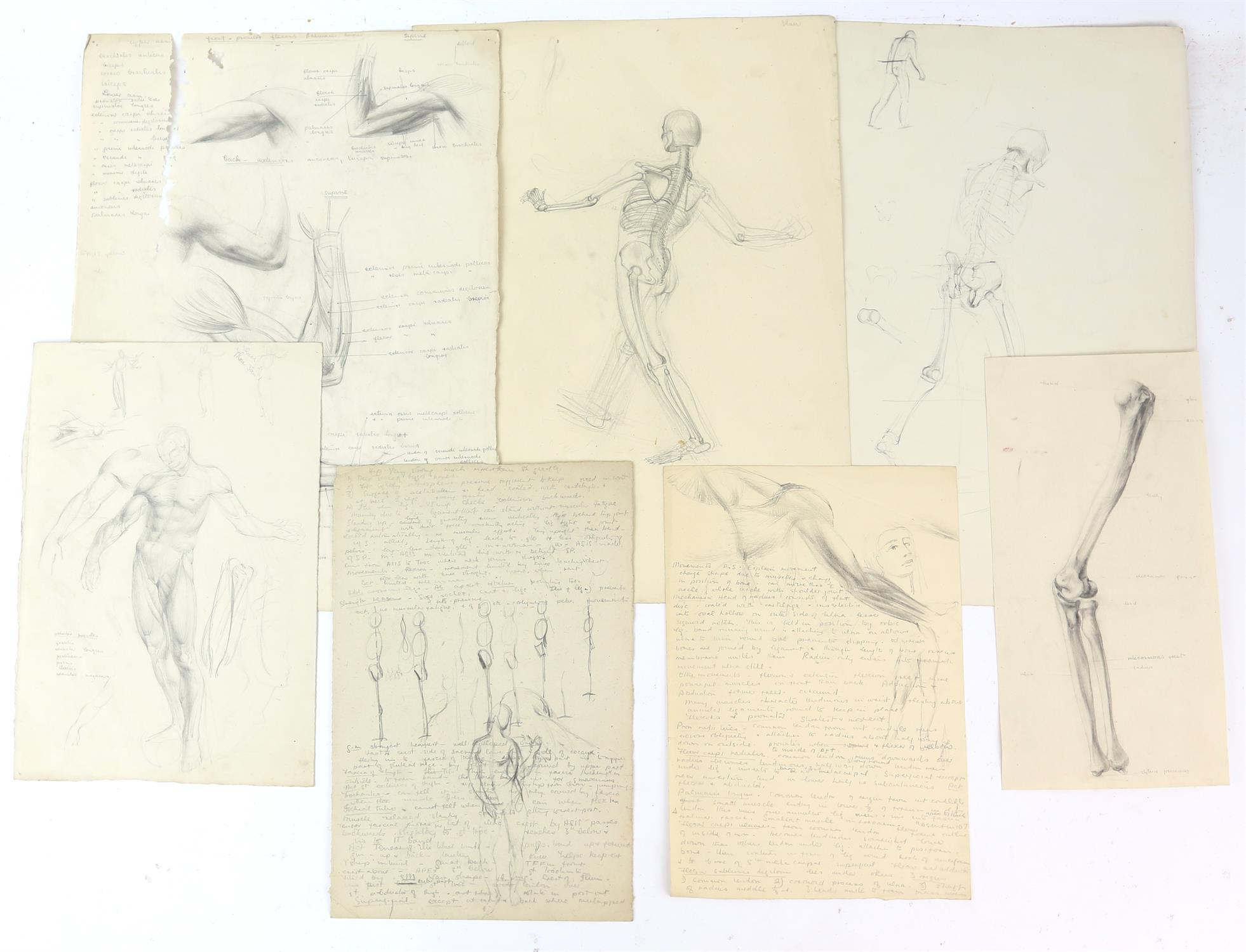 Attributed to Barbara Shaw (b.1924). Folder containing a large number of anatomical drawings with - Image 5 of 5