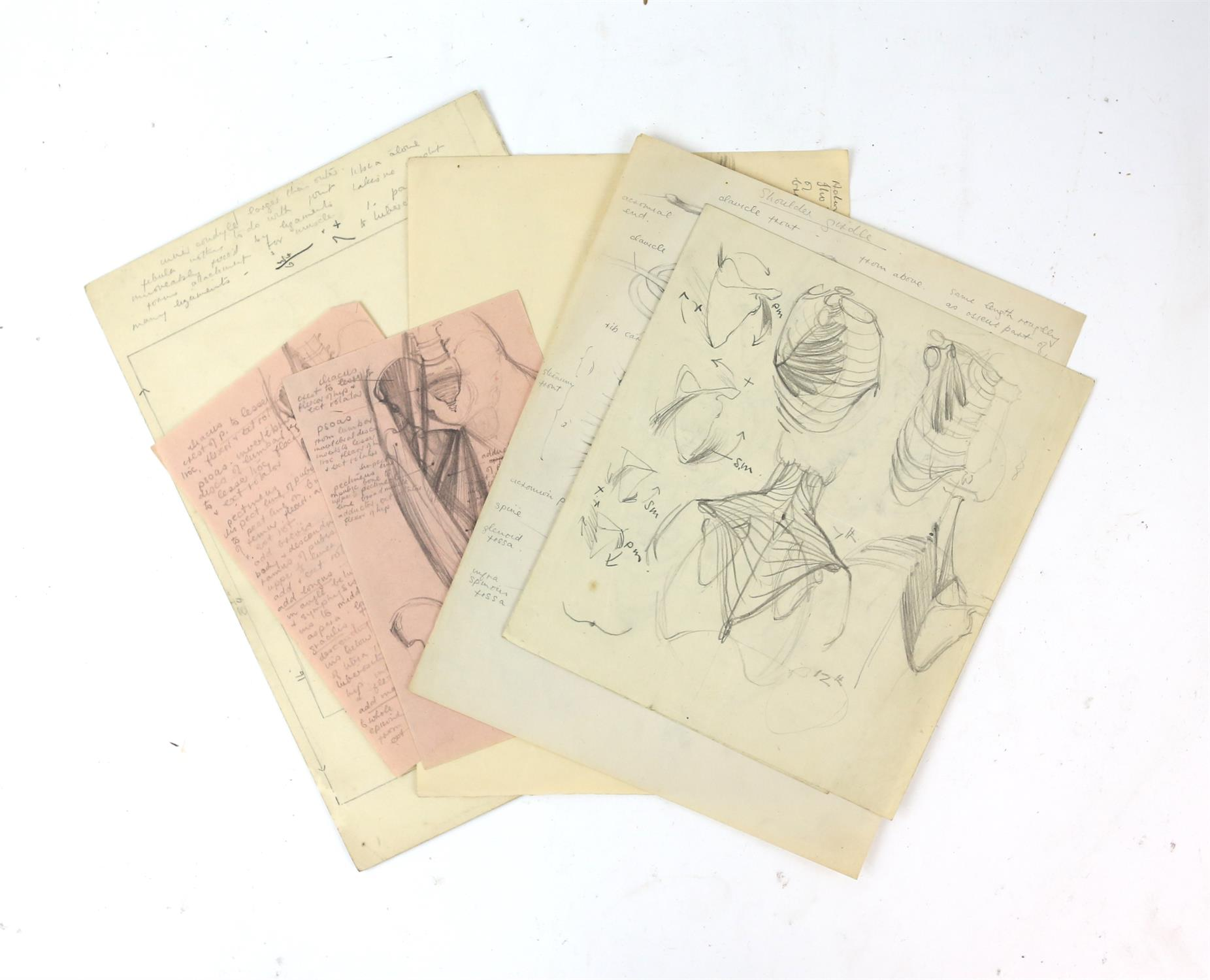 Attributed to Barbara Shaw (b.1924). Folder containing a large number of anatomical drawings with - Image 2 of 5