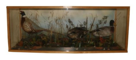 """Taxidermy:A large cased arrangement, """"A Male and Female Duck and a Pheasant set in naturalistic"""