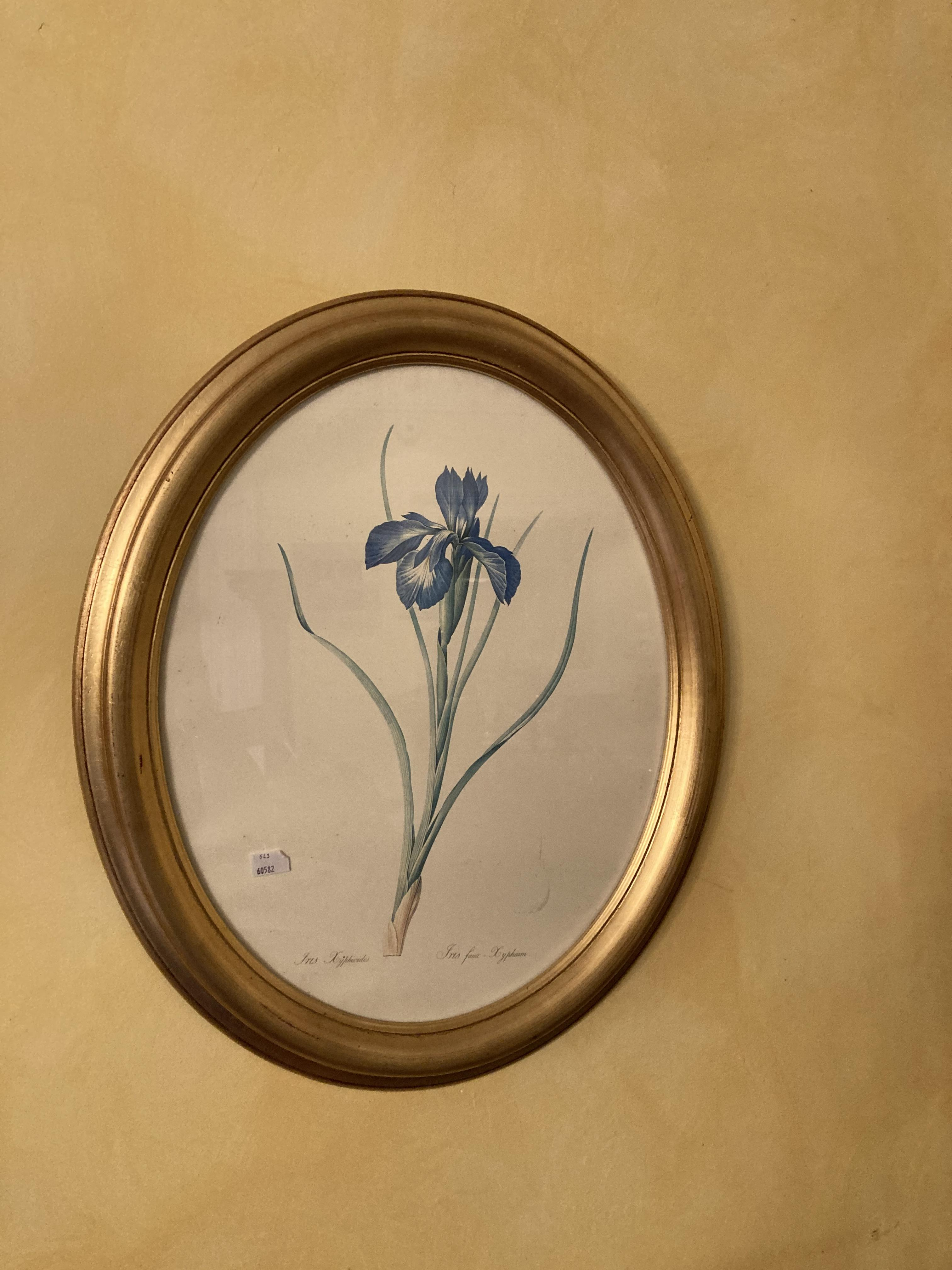 A pair of oval modern coloured Flower Prints, 19'' x 15'' (48cms x 38cms); another Flower Print - Image 4 of 5