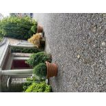 A very long pair of relief moulded terracotta Planters, of circular tapering form with fruit