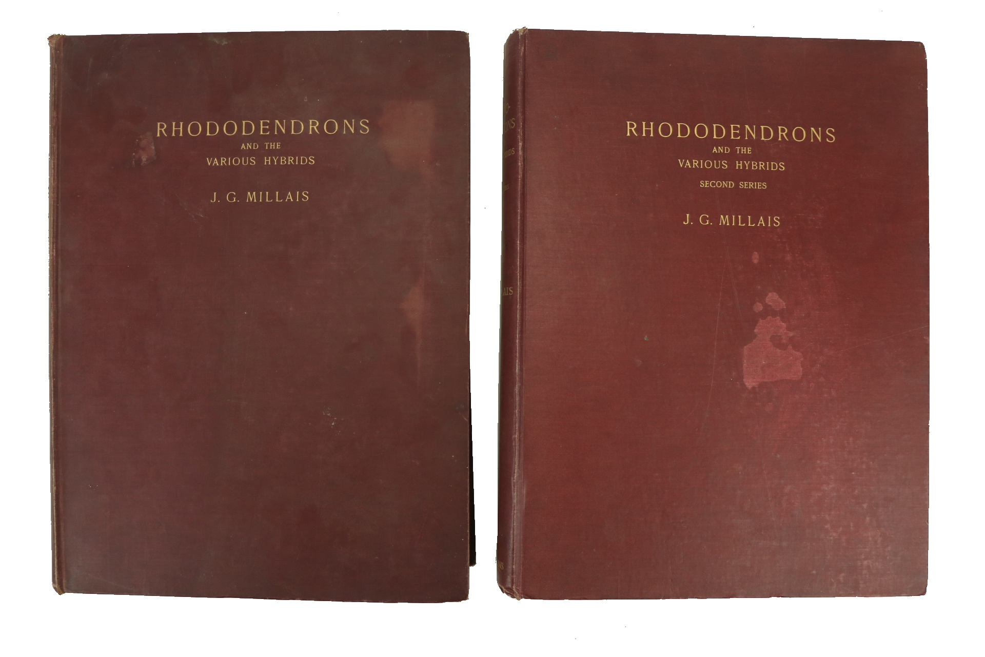 Millais (J.G.)ÿRhododendrons, ... An Account of All Species of the Genus Rhododendron (including