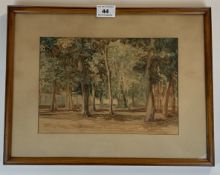 """Watercolour of trees. Unsigned. 10"""" x 7"""", frame 15"""" x 11.5"""". Painting ok, mount discoloured."""