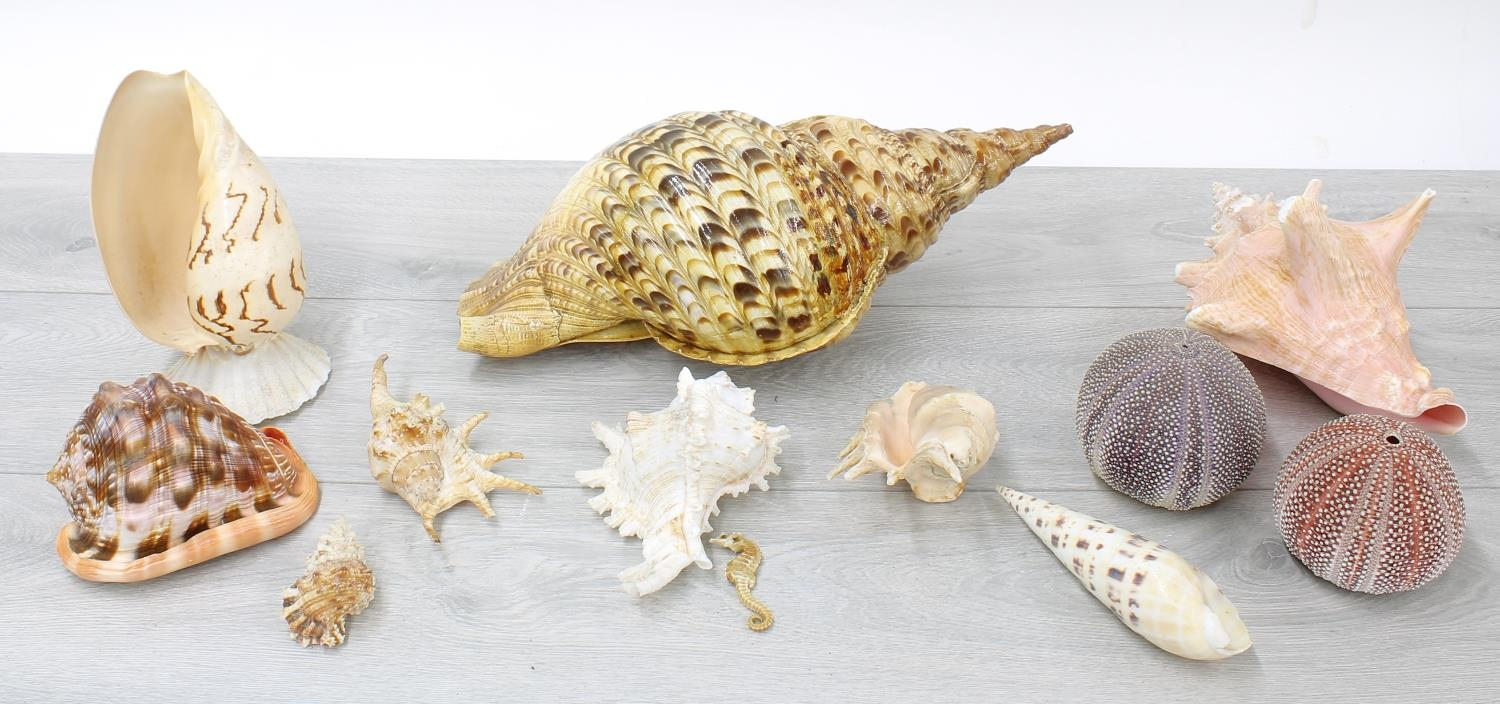 Small collection of seashell specimens