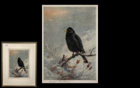 Archibald Thorburn Artist Pencil Signed Print of a ' Blackbird '