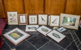 Mixed Selection of ( 13 ) Glazed and Framed Prints, Animals and Fish, Golfing Interest,