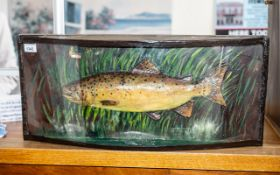 Taxidermy Interest: Large Fish in Curved
