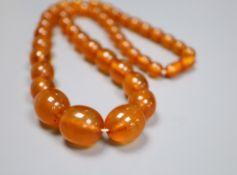 A single strand graduated oval amber bead necklace, 52cm, gross 42 grams.