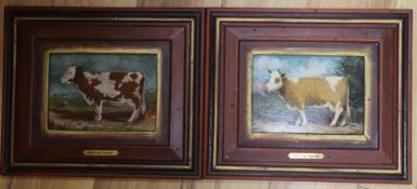 Andrea Mosimann-Grass, two oils on board, Studies of cows, initialled, 15 x 20cm