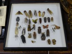 A collection of late 1920's and later cicada, bakelite and bug brooches
