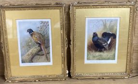 Archibald Thorburn, pair of signed colour prints, Pheasant and Grouse, 18 x 13cm