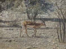 W. Ron Campbell (1930-2012), pastel, Thompson's Gazelle, signed, 46 x 60cm