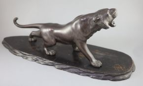 A Japanese bronze figure of a tiger, naturalistically modelled, standing roaring, Meiji period,