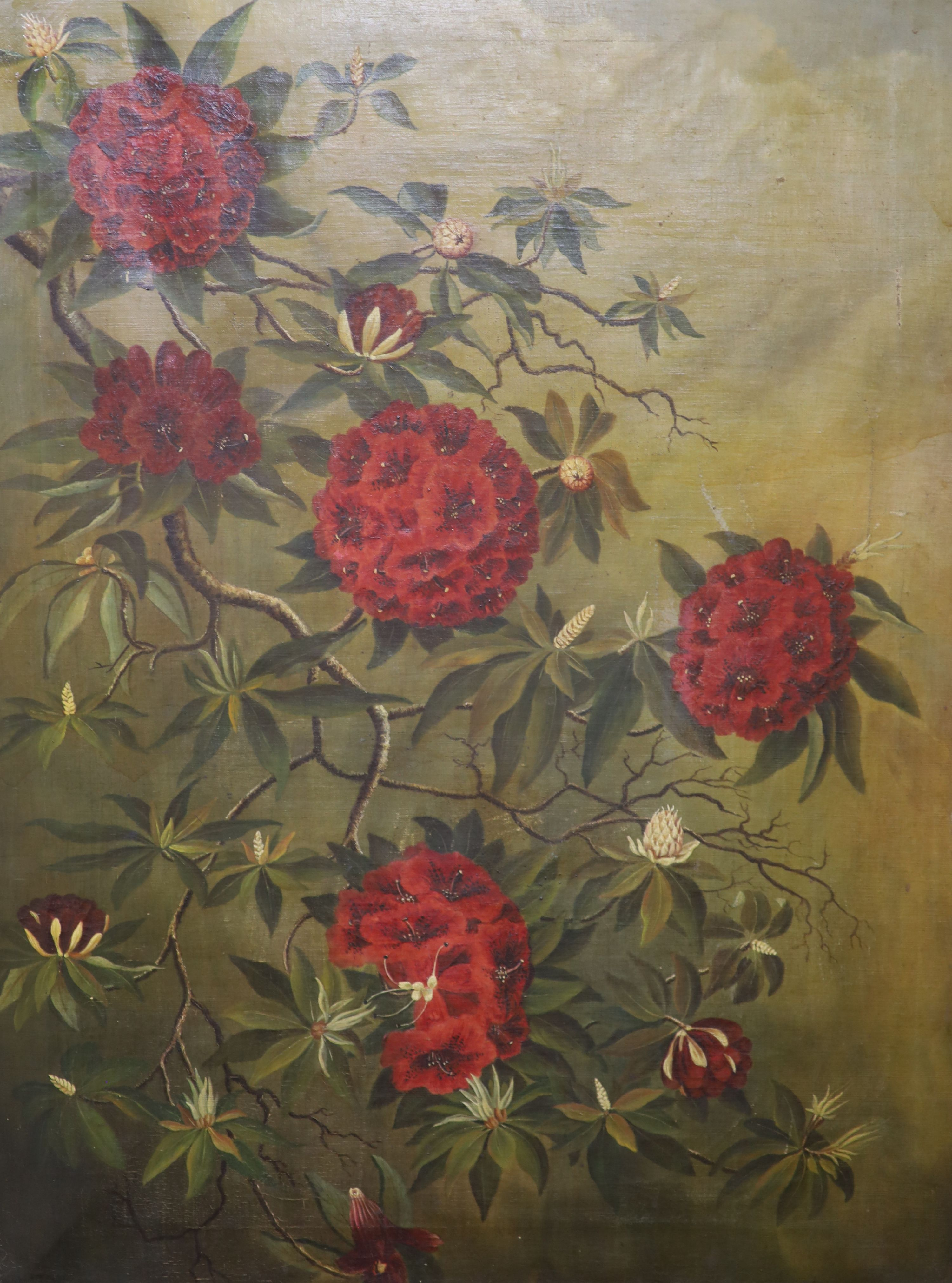 English School c.1900, oil on canvas, Study of Rhododendron blossom, indistinctly signed, 90 x 67cm