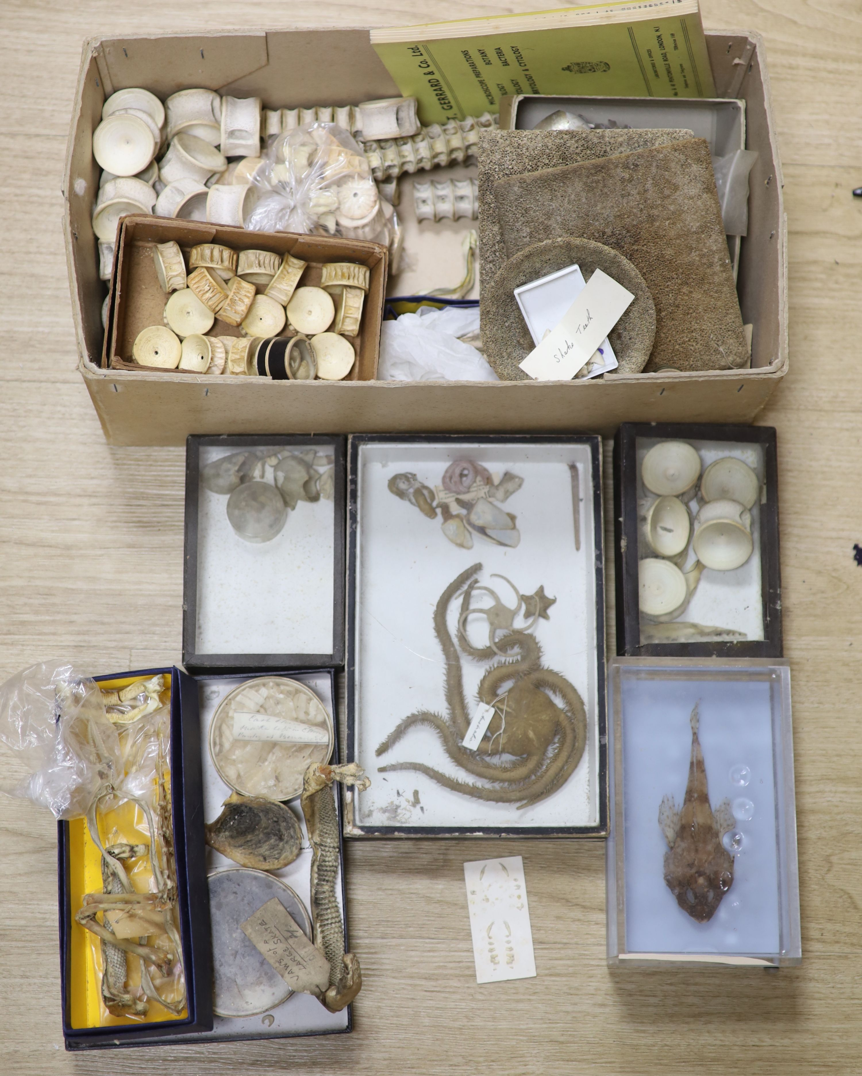 A collection of sea creature and reptile specimens, most collected before 1945, to include shark's