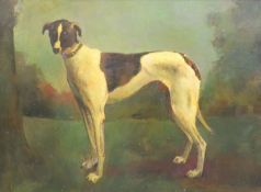 20th century English School, oil on board, Study of a greyhound, 60 x 80cm