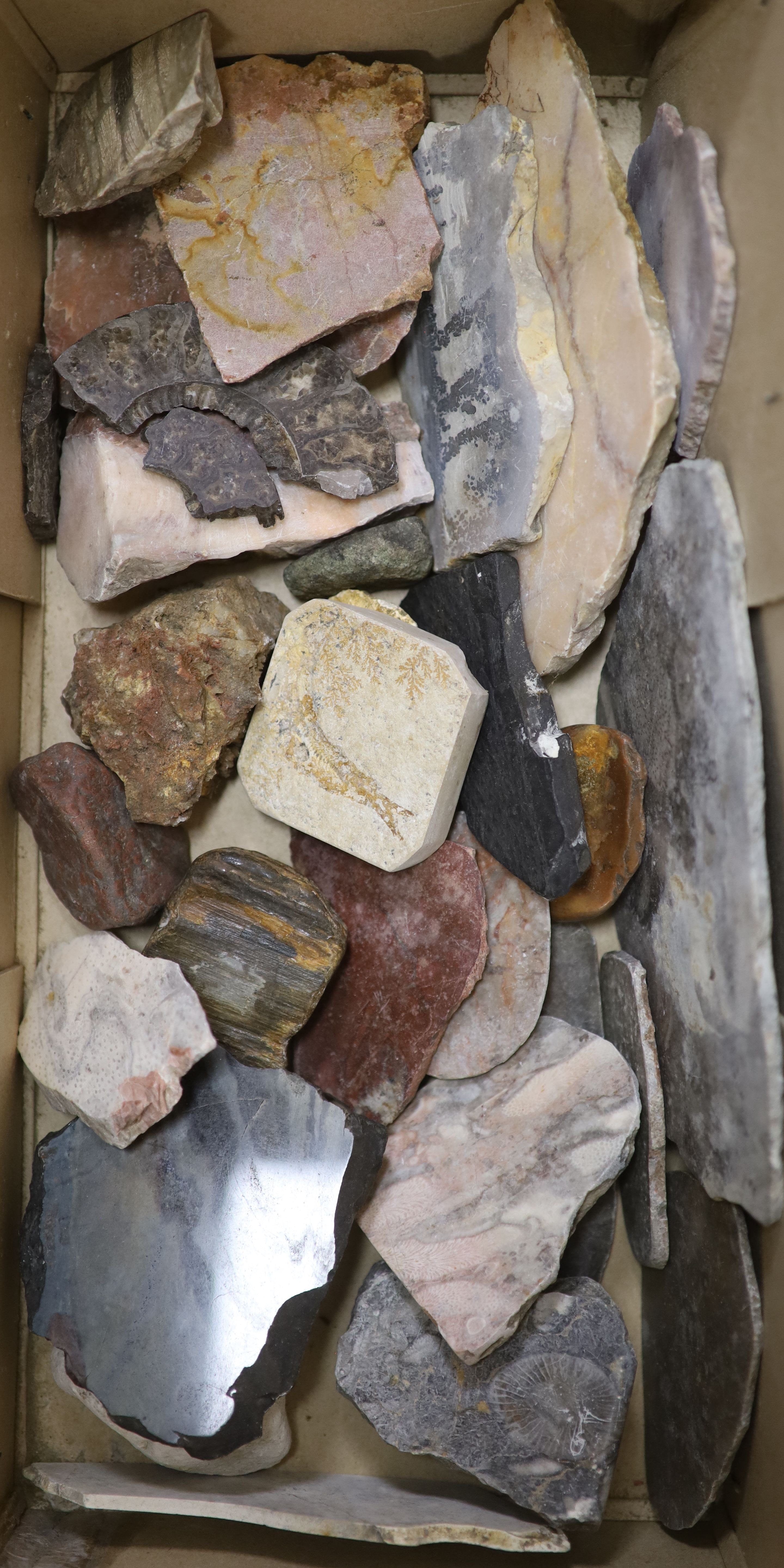 A large collection of fossil marble and fossil specimens, collected before 1970, largest 19.5cm, - Image 2 of 3