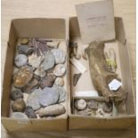 A collection of stone fossils and semi-fossilised teeth and bones, collected before 1950 to