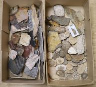 A large collection of fossil marble and fossil specimens, collected before 1970, largest 19.5cm,