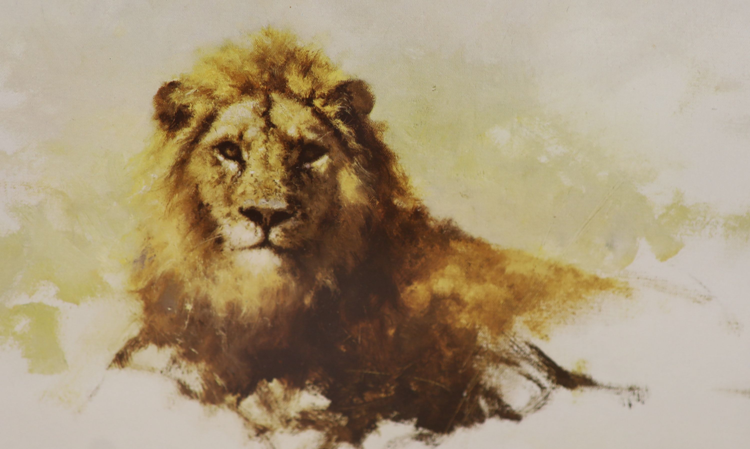Three David Shepherd limited edition prints; Lion Sketch, Tiger Sketch and Rhino Reverie, signed - Image 4 of 4