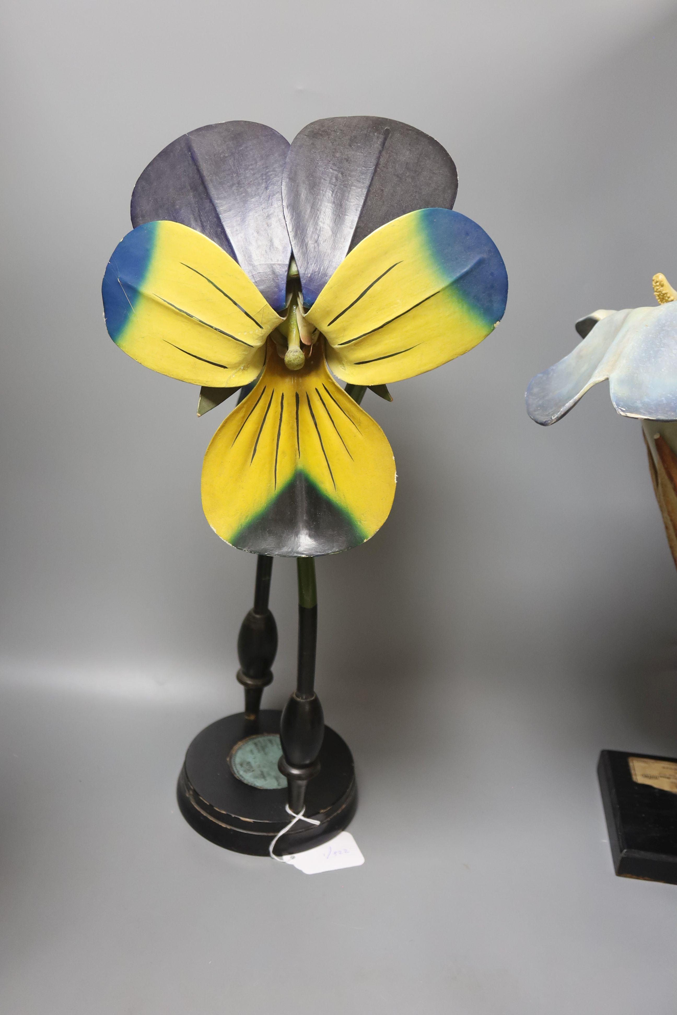 A Group of four 20th century German Brendel botanical specimen / teaching models, Pisum Pois - Image 4 of 5