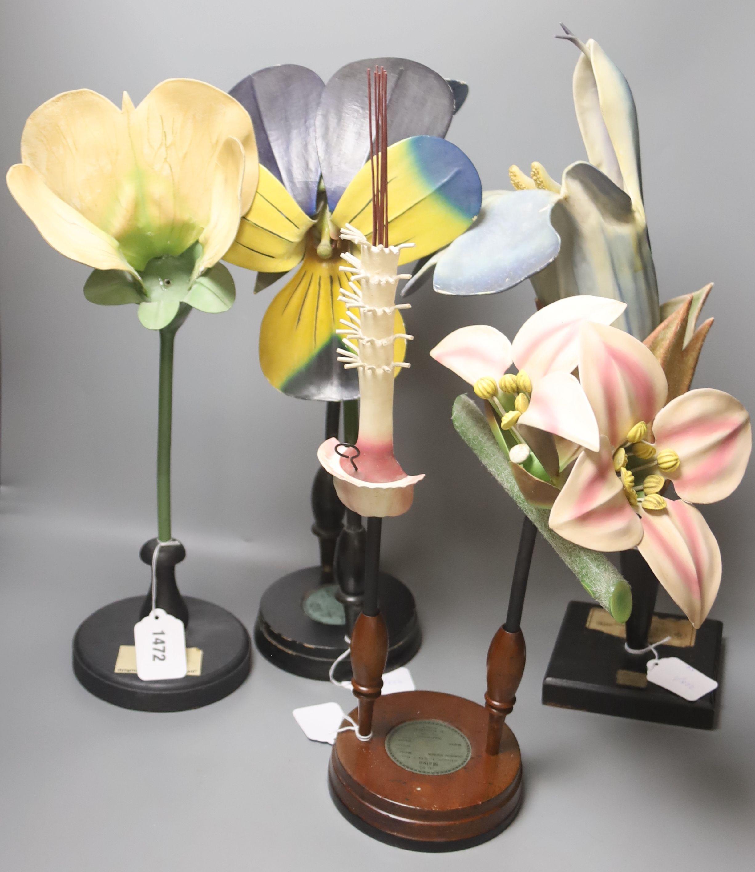 A Group of four 20th century German Brendel botanical specimen / teaching models, Pisum Pois