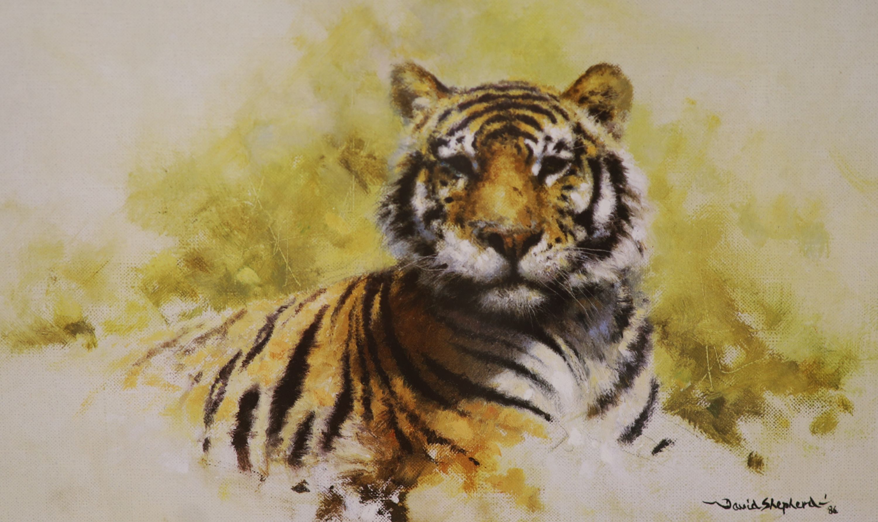Three David Shepherd limited edition prints; Lion Sketch, Tiger Sketch and Rhino Reverie, signed - Image 2 of 4