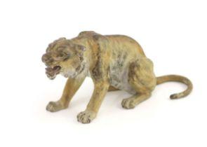 A Franz Bergman cold painted bronze model of a snarling tigerStamped 'Bergman, Geschutz, 479'H