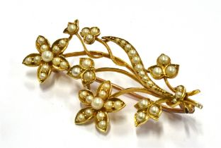 AN EDWARDIAN GOLD SEED PEARL BROOCH The seed pearl set floral spray brooch 45mm long, unmarked,