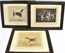 THREE DOG RELATED PRINTS: 'Mr. Obaldestons Furrier' (1820)'; 'Lord Coventry's Rambler (1873) and