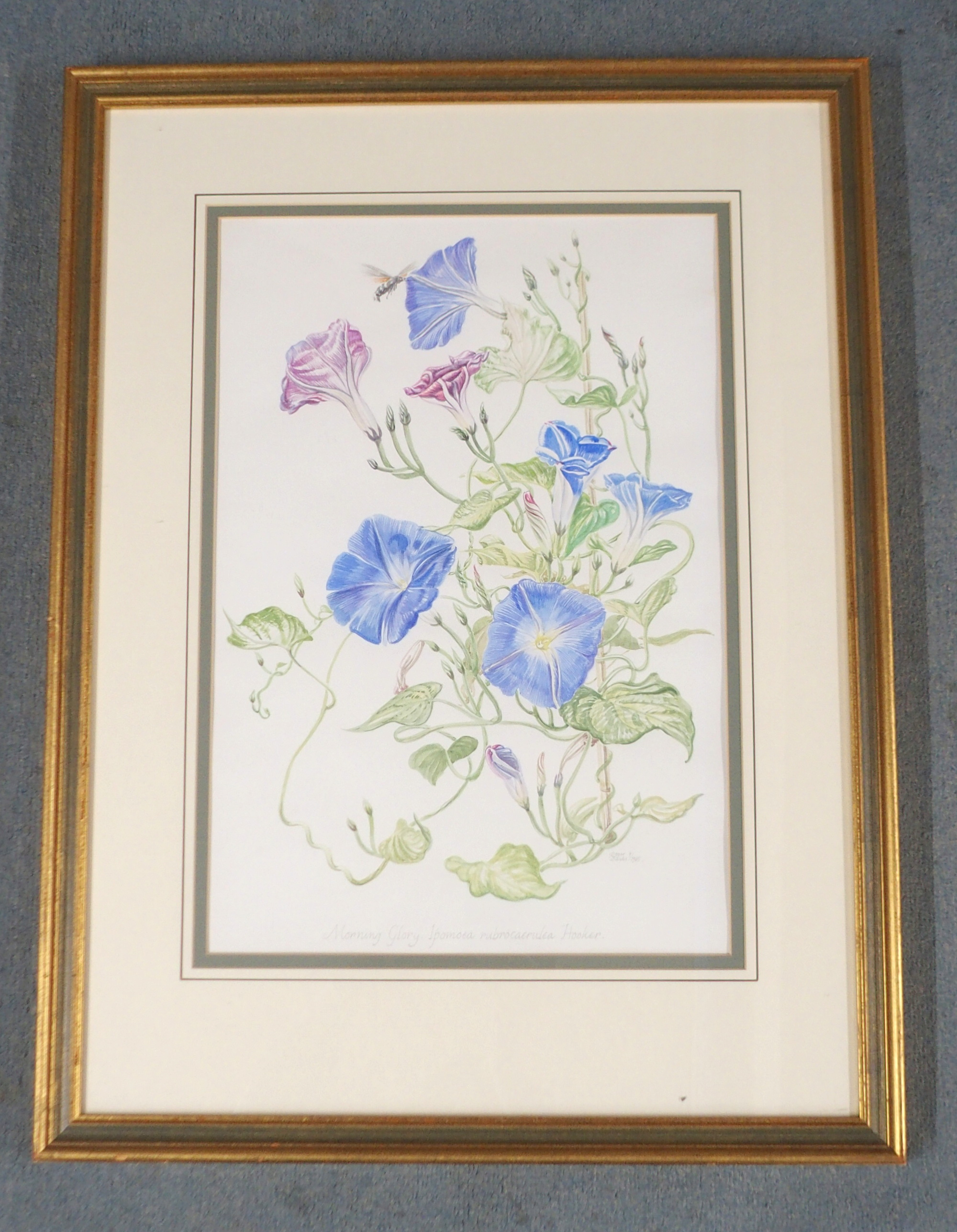 •ROGER BANKS (SCOTTISH 1929-2008) MORNING GLORY watercolour, signed, inscribed and dated, 1985, 52 x - Image 2 of 5