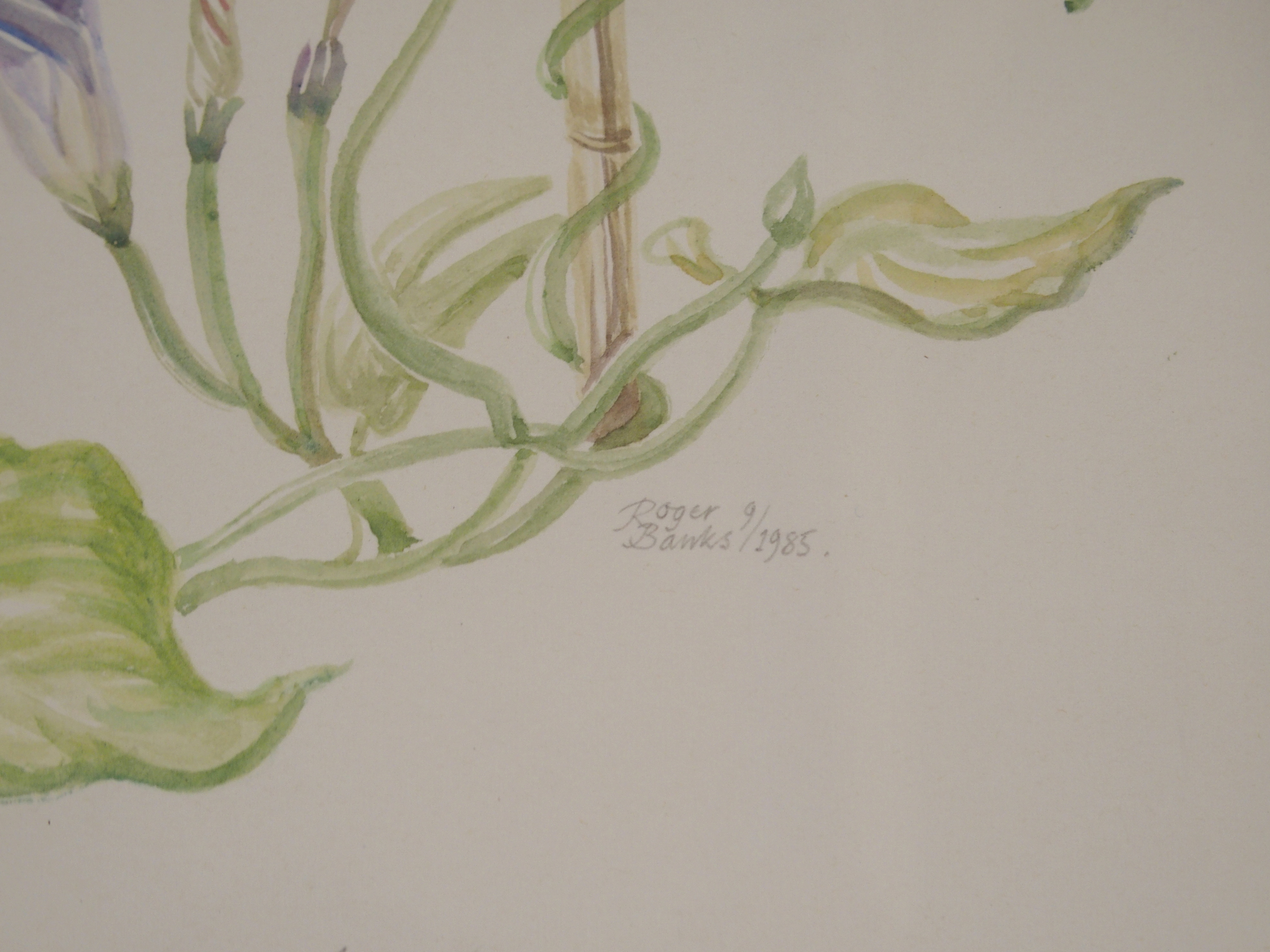 •ROGER BANKS (SCOTTISH 1929-2008) MORNING GLORY watercolour, signed, inscribed and dated, 1985, 52 x - Image 4 of 5